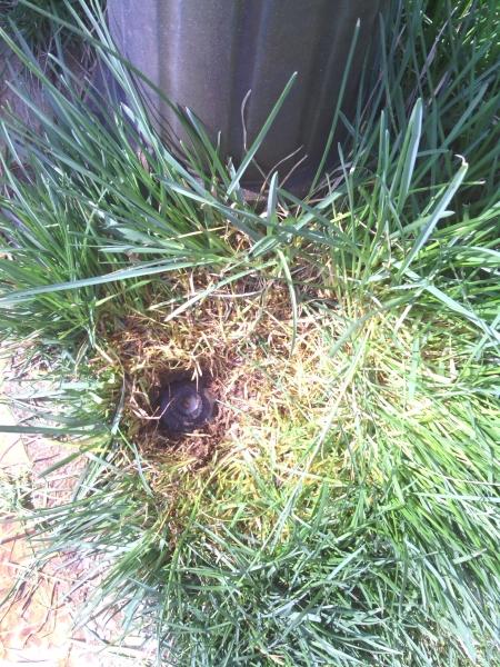 Po prerezaní trávy