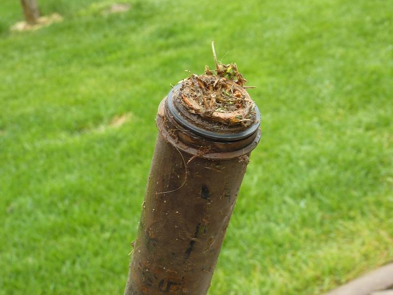 Prerastená hlavica koreňom - Claber